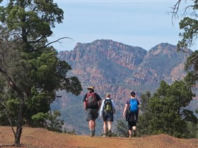 Flinders by Foot - Three or Five Day Guided Bushwalks